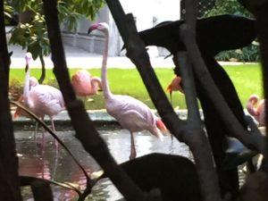 Flamingo in Milan